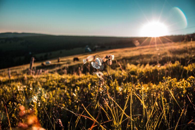 草原に咲く白い花と差し込む光